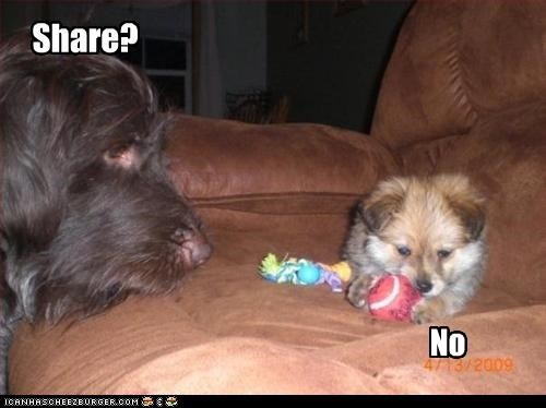 ball,couch,no,share,whatbreed
