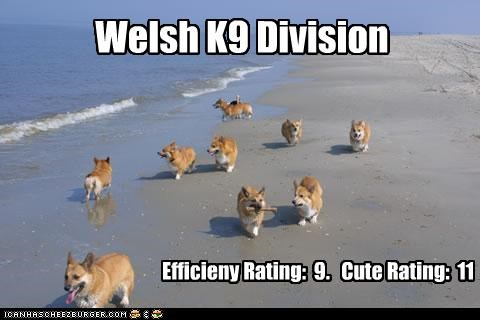 Welsh K9 Division Efficieny Rating: 9. Cute Rating: 11