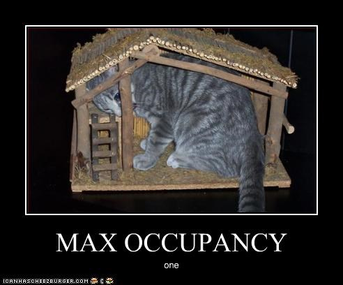 MAX OCCUPANCY one