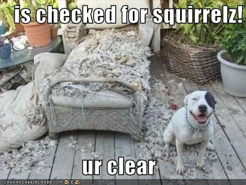 couch destruction FAIL look pitbull squirrels