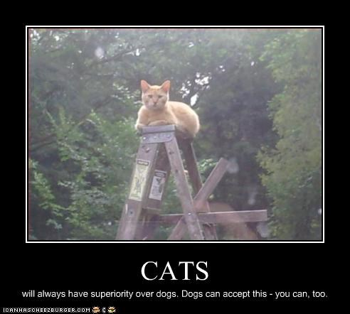 CATS will always have superiority over dogs. Dogs can accept this - you can, too.