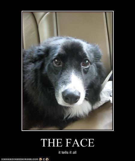 eyes face Sad whatbreed - 2304835840