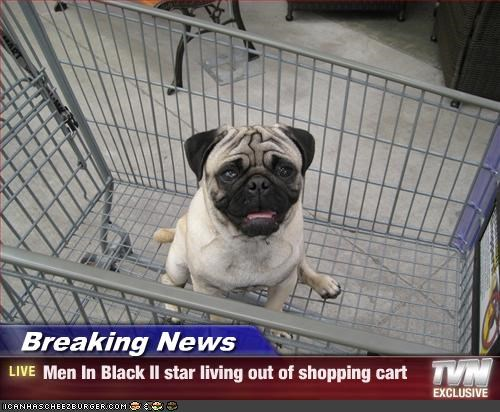 men in black,movies,pug,shopping cart,star