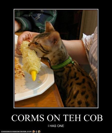 CORMS ON TEH COB I HAS ONE