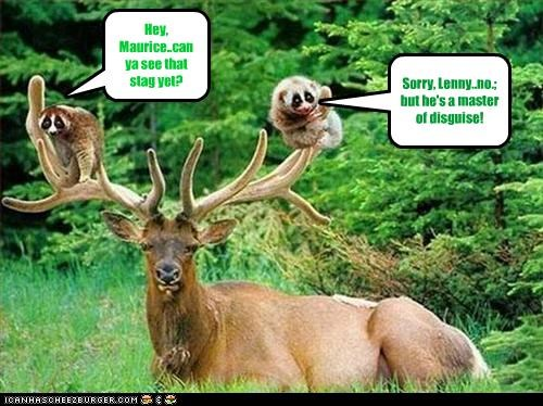 Hey, Maurice..can ya see that stag yet? Sorry, Lenny..no.; but he's a master of disguise!