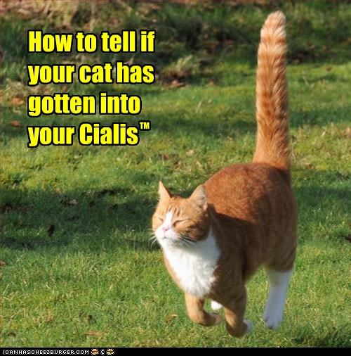 How to tell if your cat has gotten into your Cialis TM