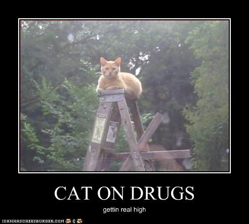 CAT ON DRUGS gettin real high