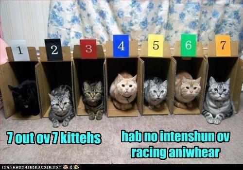 7 out ov 7 kittehs hab no intenshun ov racing aniwhear