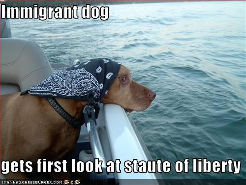 immigrant,Statue of Liberty,vizsla