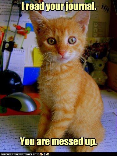 bad cat cute kitten - 2309204224