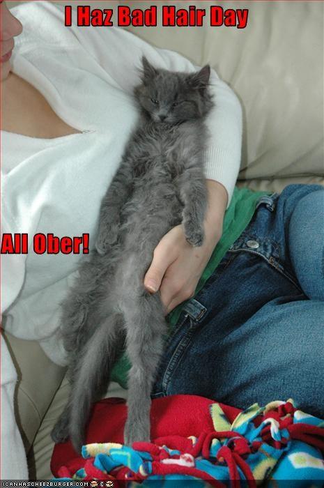 Cheezburger Image 2309294848