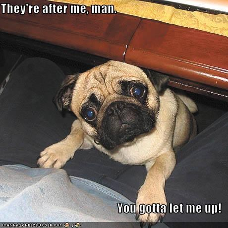 chased help police pug trouble - 2309498624
