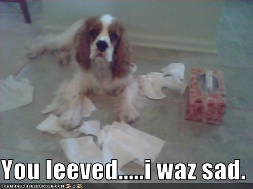 cavalier king charles spaniel,crying,leaves,Sad,tissues