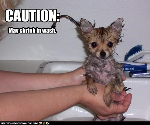bath caution chihuahua puppy shrink wash - 2311578880