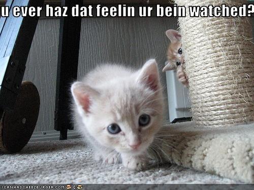 cute hunting kitten plotting sneaky - 2313816320
