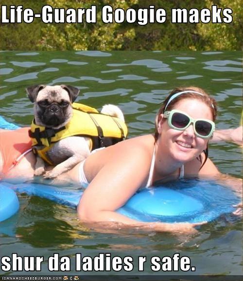 ladies lifeguard pool pug safe swimming
