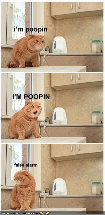 cat funny Hall of Fame lolcat poop pooper poopin toilet wtf - 2315036928