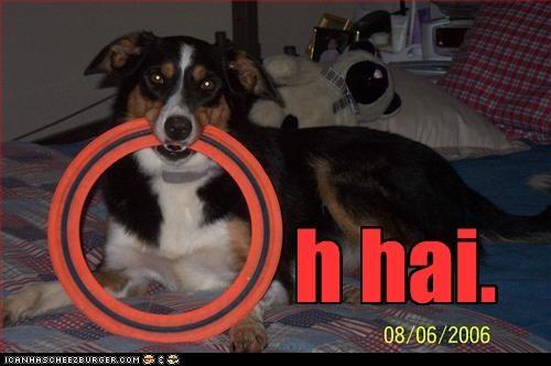 bed frisbee o hai whatbreed - 2315191040