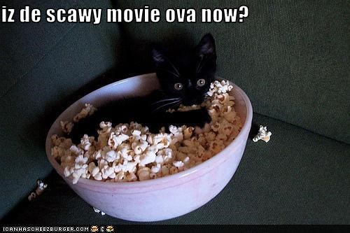 cute kitten movies nom nom nom scared - 2316529920