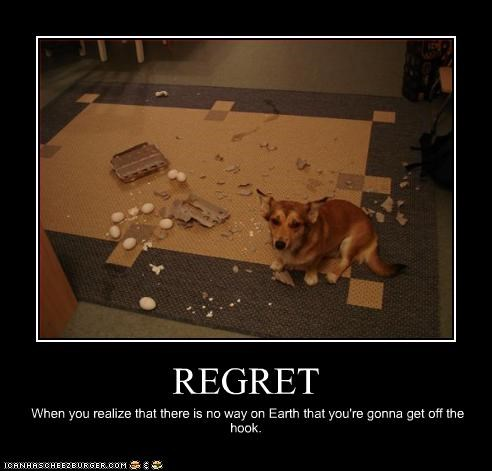 corgi eggs FAIL mess regret trouble whatbreed - 2317807360