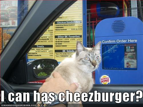 Cheezburger Image 2318307072
