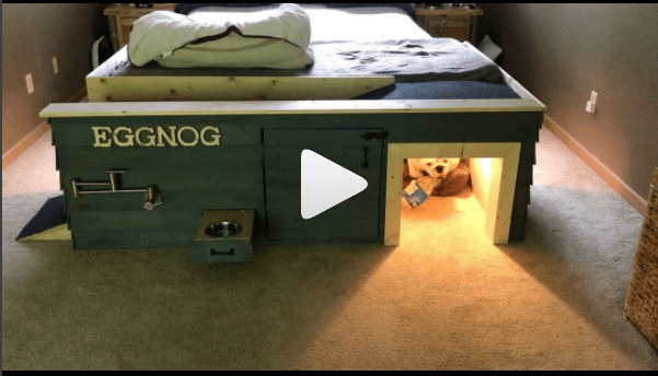 video of a bulldog showing her fancy home