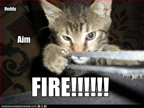 attacking bad cat - 2318830336