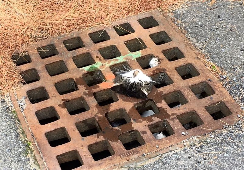 Cat rescued by firefighters from a drainage gate.