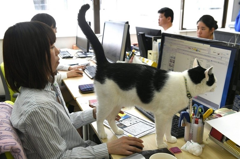 A company allows workers to bring in their cat in order to deal with the stressful working enviroment