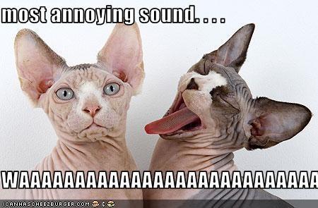 most annoying sound
