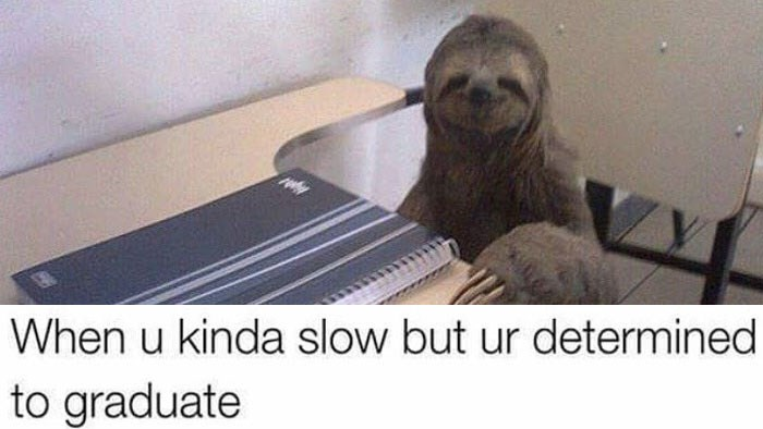 A funny and wholesome and cute roundup of memes and web comics featuring animals, dogs, cats, sloths, friendships, love, relationships, dating, life and school.