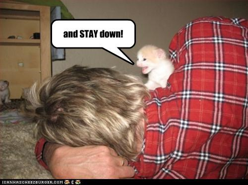 attacking cute kitten murder - 2321306368