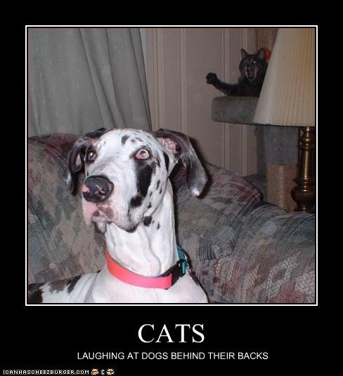 back,behind,great dane,laughing,lolcats,mean
