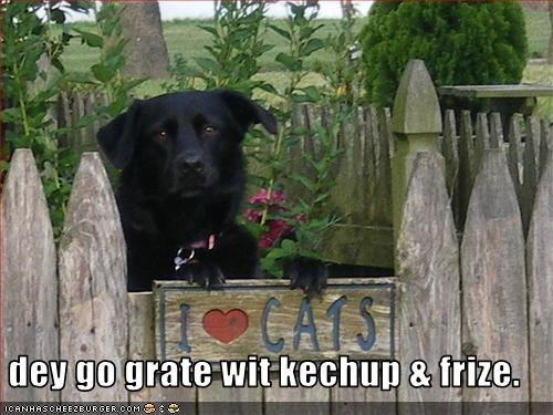 eat french fries ketchup labrador lolcats love - 2324722432
