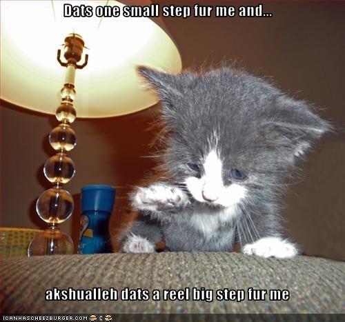 cute kitten scared tiny - 2325334272
