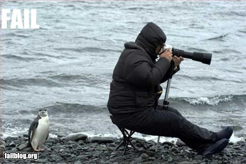 behind,g rated,penguin,photographer,wildlife