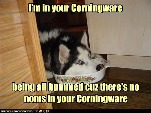 I'm in your Corningware being all bummed cuz there's no noms in your Corningware