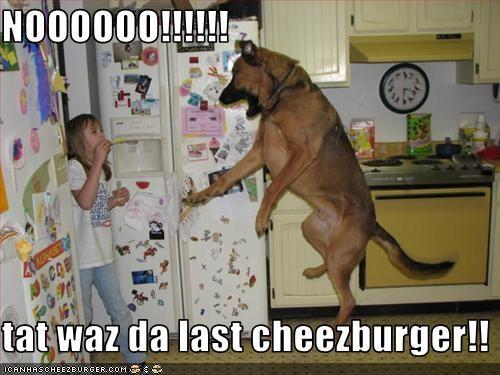 Cheezburger Image 2328154880