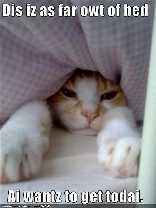 bed lazy monday nap - 2329687808