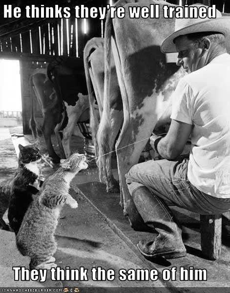 good cat milk plotting smart training - 2329897216