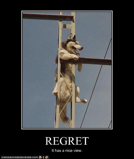 climbing FAIL high husky regret stuck - 2331244288