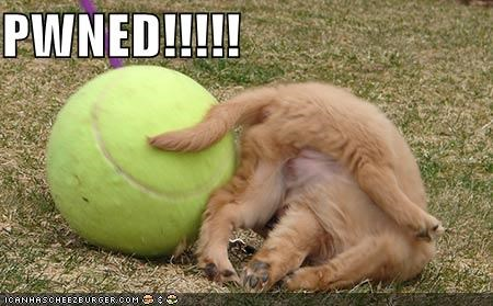 ball,cute,FAIL,fall,puppy,tennis,whatbreed