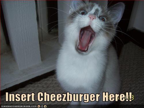 Cheezburger Image 2331994880