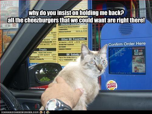 Cheezburger Image 2333436160