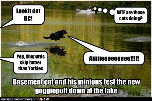 Basement cat and his minions test the new goggiepult down at the lake Lookit dat BC! Yep, Shepards skip better than Yorkies WTF are those cats doing? Aiiiiieeeeeeeee!!!!!