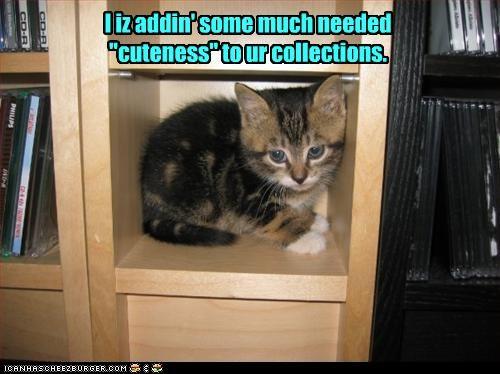 cute kitten movies - 2336012032
