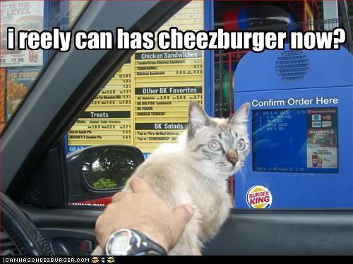 Cheezburger Image 2339748096