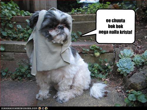 Cheezburger Image 2339815168