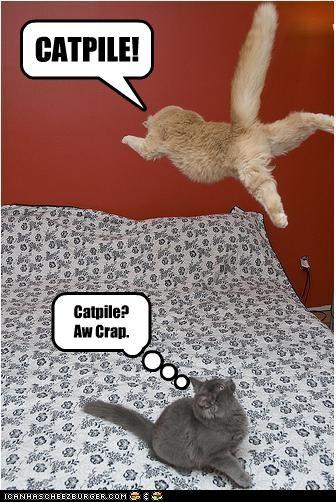 CATPILE! Catpile? Aw Crap.