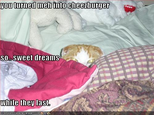 Cheezburger Image 2341540096